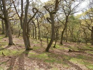 Burnhope Wood