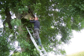 Putting up barn owl boxes